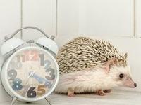 勉強に集中できない!?効率よく勉強するための「時間の使い方」3つのポイント